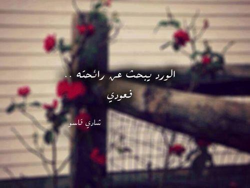الورد يبحث عن رائحته فعودي شادي قاسو We Heart It Beautiful Arabic Words Valentines Wallpaper Words Quotes