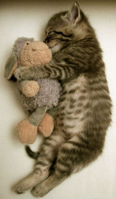 Even kitties need a little security in the form of a stuffed animal.  Kindred souls!