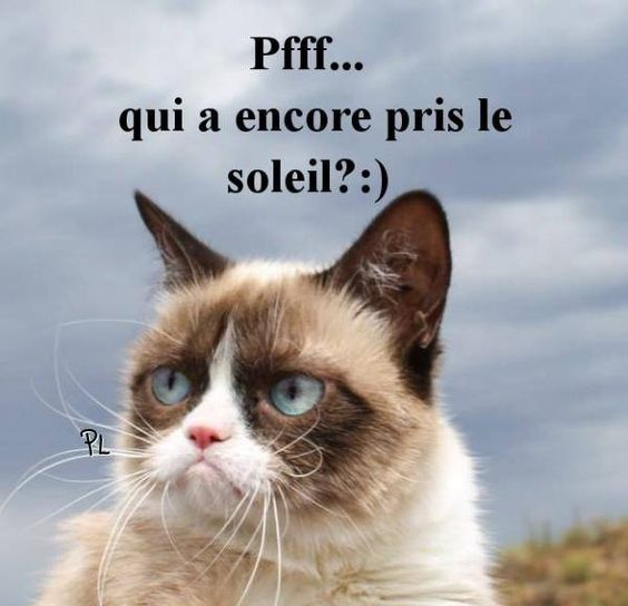 Météo image #4553 - Pfff... qui à encore pris le soleil? :) - Drôle, Grumpy Cat, Pluie, Soleil. Partager cette photo sur Facebook, Twitter et WhatsApp.