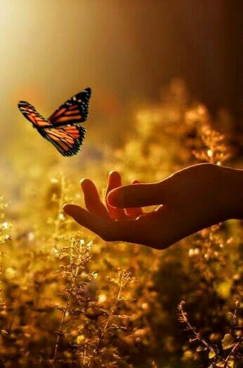 Like the butterfly that crawled on me.