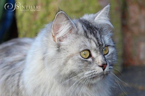 Sinthari ~ Ch. Malin von Sinthari