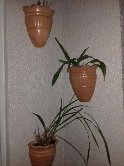 Plantas suspensas em vasos de cerâmica