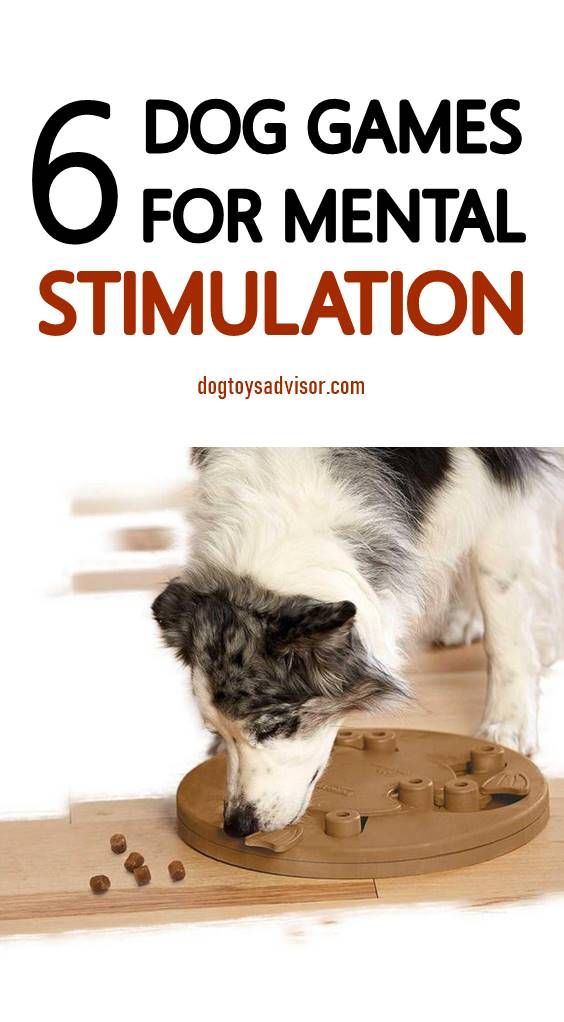 Looking For Simple And Fun Brain Games For Your Dog If Your Dog