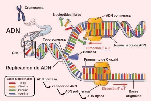 Macromoléculas en 2020 | Biología avanzada, Biología, Enseñanza ...