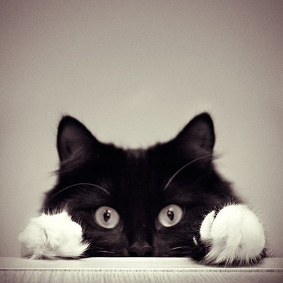 Black and white adorable feline...