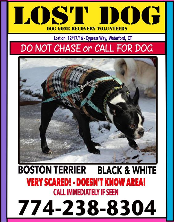 CT Dog Gone Recovery Volunteer Network Published by Sharon Boulanger Like This Page · 23 hrs · Gracie went missing from the house she was visiting on Cypress Way in Waterford, CT She is a 10-year-old, Black with white markings, tall and slim Boston Terrier. She's very skittish and doesn't know the area. She is not wearing a collar, but she is chipped. It is fine to drive around and look for her, however, please DO NOT go out searching for her by foot, this will only scare her further away...