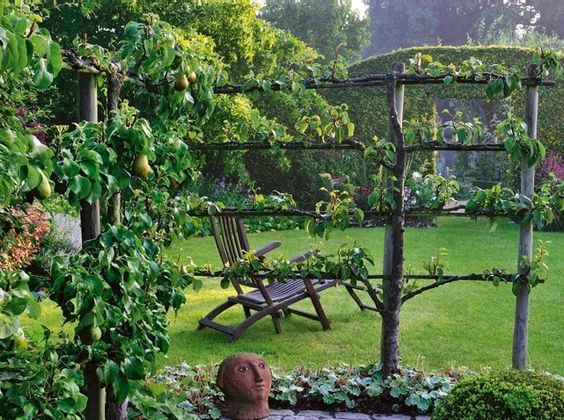 Arbres fruitiers en espalier cr ation d 39 un petit jardin for Amenagement jardin fruitier