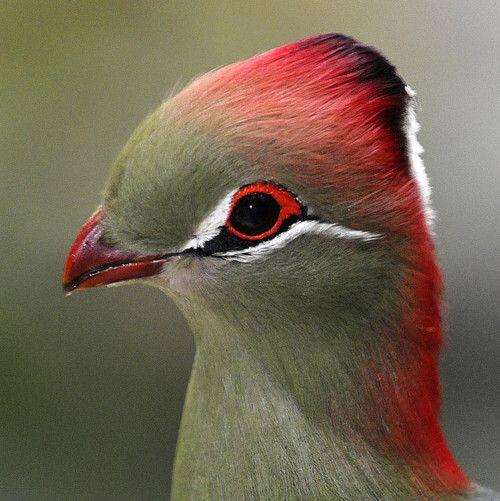 Thoughtful bird