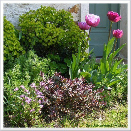 - Jardinement Vôtre - Tulipes Blue Diamond, Hebe Pink Lady aux jeunes pousses pourpres,  Euphorbe 'Redwing Charam', myosotis roses, des nigelles, un sedum matrona, une ancolie, des alliums