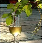 vinos de montilla -