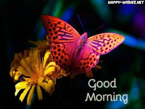Image Result For Cute Good Morning Pics Beautiful Butterflies Butterfly Wallpaper Butterfly Pictures