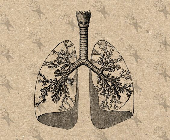 vintage images lungs and clipart black and white on pinterest