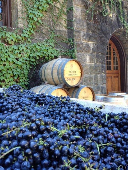 Château Montelena ~ France  A ideia de ter uma videira!...No novo mundo,com certeza.