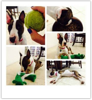 Savannah is very dog friendly! She was an owner surrender, where her owners landlord wouldn't allow 4 dogs in home.  11/7/13 - Update from...