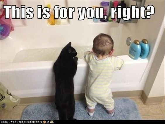 30 Funny animal captions - part 8, funny animal meme, animal pictures with…