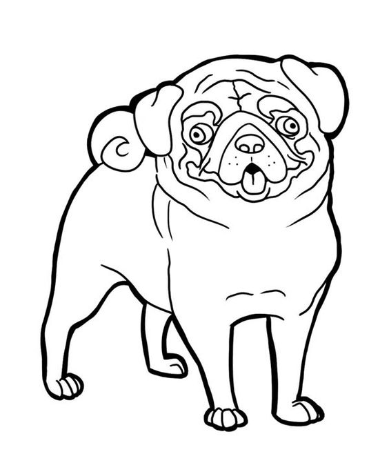 Coloring pug and funny faces on pinterest for Pug coloring pages to print