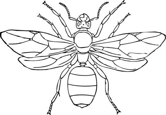 parts of an insect coloring page