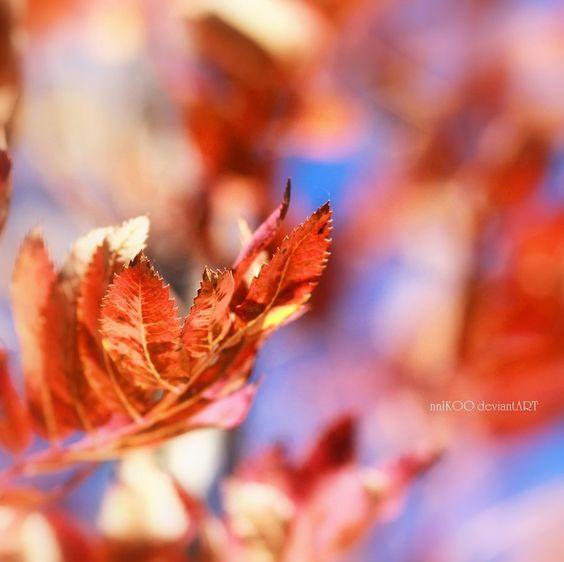 autumn by nnikoo