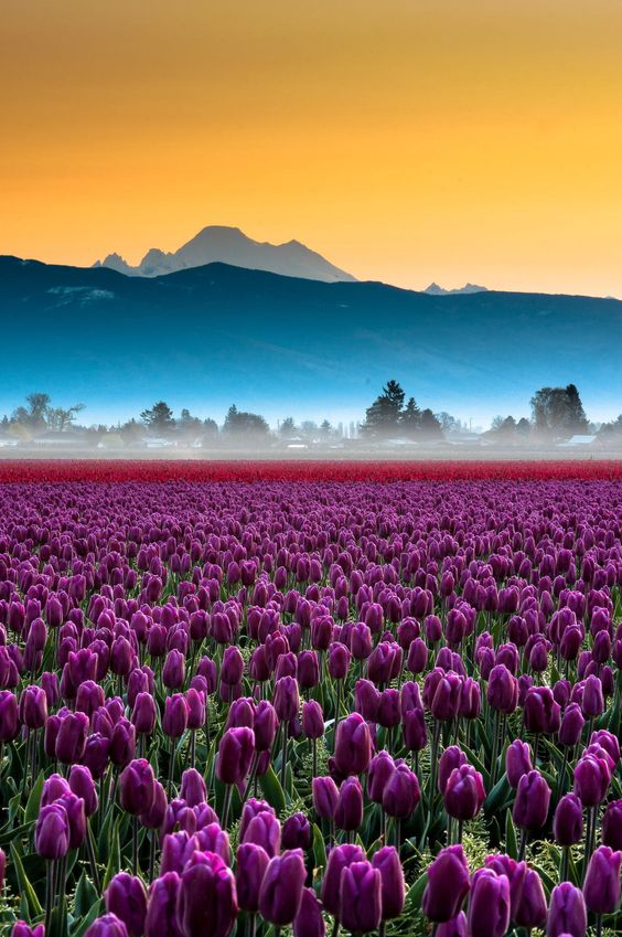 vale Skagit #flowers