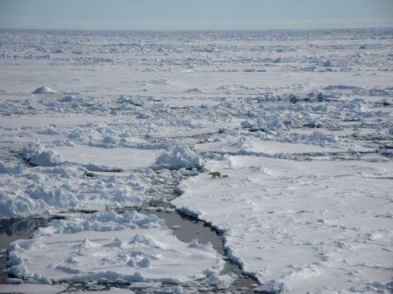 Polar Bears on Arctic Ice - A baby polar bear follows its mother across Arctic ice. - dit: SopCrehie TRAN, Laboratoire des Sciences du Climat et de lEnvironnement (LSCE), distributed by EGU under a Creative Commons license.