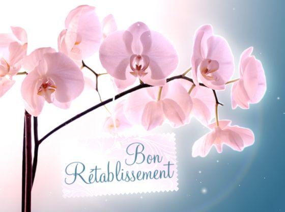 Ma Carte Prompt Retablissement Une Orchidee Pour Un Bon