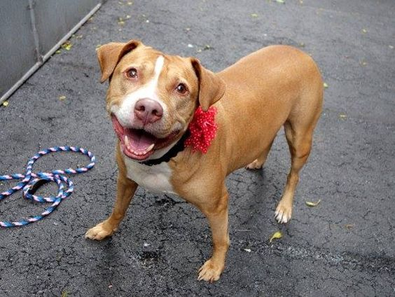 SAFE! RTO   Manhattan Center    LINDA - A1000838