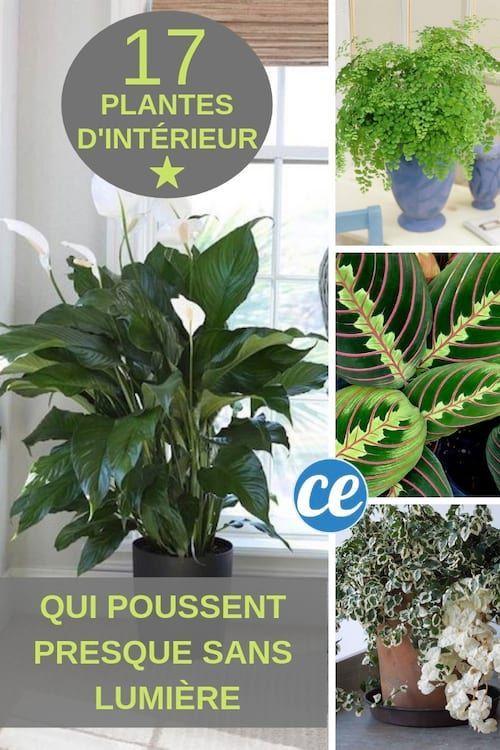 17 Plantes D Interieur Qui Poussent Sans Lumiere Du Soleil Avec