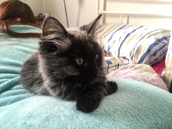 Rescue Kitten S Fever Coat Changes Color In 2020 Kitten Rescue Cute Cats Photos Kitten