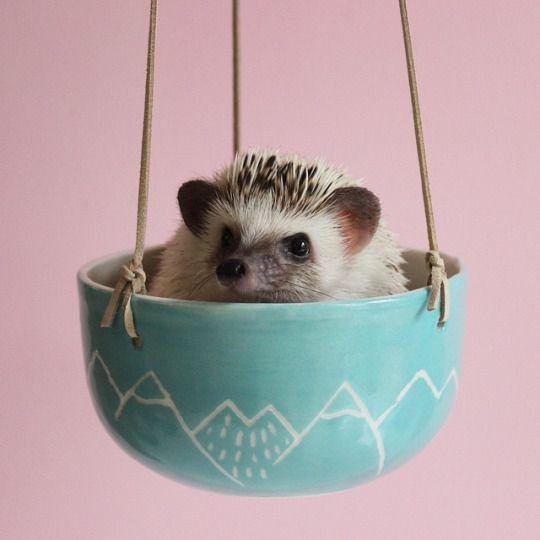 Calico The Hedgehog: