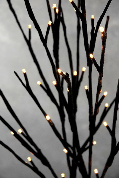 Lighted Branches Branches And Willow Branches On Pinterest