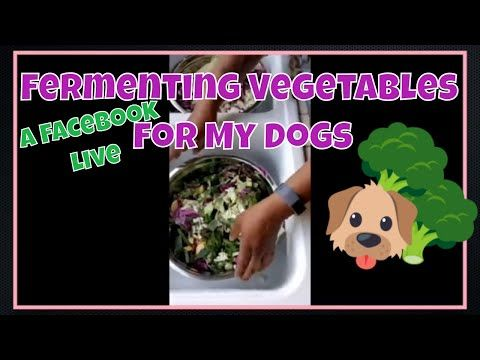 Making Fermented Vegetables For My Dogs Facebook Live Youtube Fermented Vegetables Fermentation Dog Diet