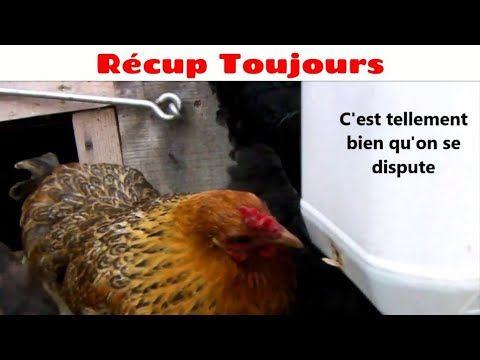 Mangeoire A Poule Economique Anti Souris Et Oiseaux Youtube Mangeoire Poule Anti Souris Alimentation Poule