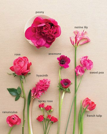 flower glossary: Pink Flower, Wedding Idea, Wedding Color, Fuchsia Flower, Fuschia Flower, Hot Pink, Flower Guide