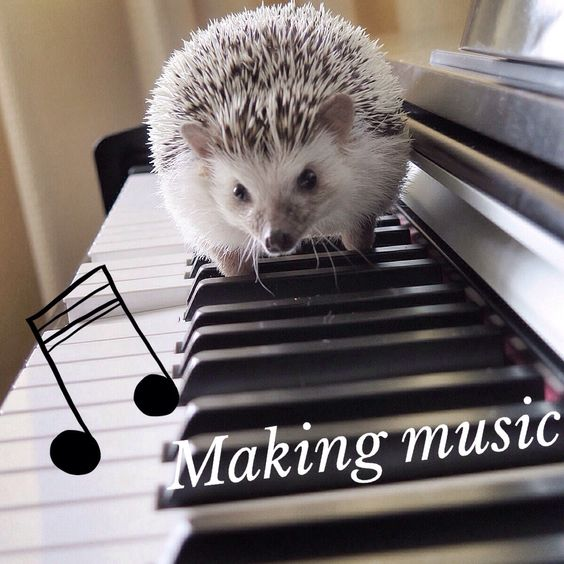 """Minnie"" Mozart in the making. #hedgehog:"