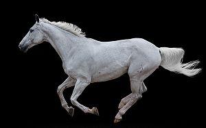 Horse-Human--An-Em_3546757e.jpg (300×187)