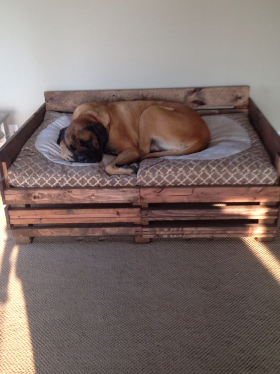 English homemade and dog beds on pinterest for Homemade pet beds