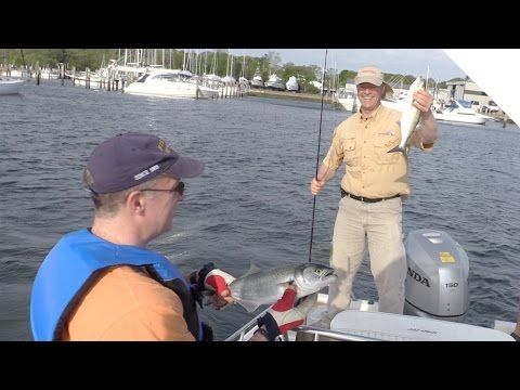 Trolling tips for bluefish in shallow channels youtube for How much is a saltwater fishing license in florida