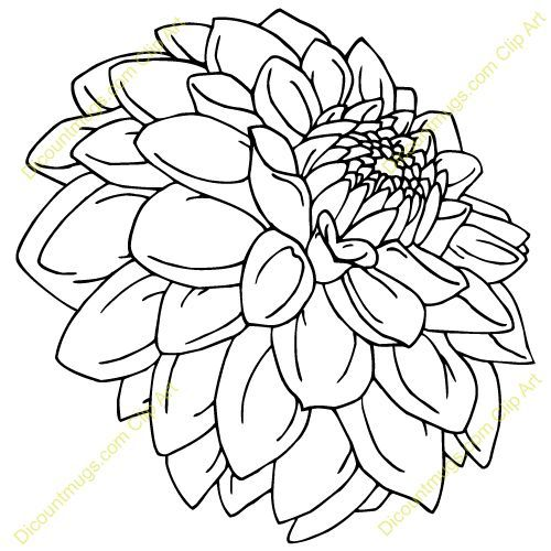 Marigold Flower Line Drawing : Line drawing dahlia found on bestclipart