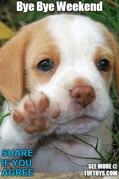 25+ Best Memes About Bye Dog   Bye Dog Memes