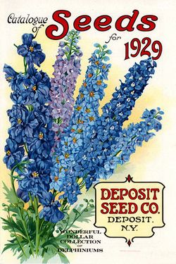 Vintage delphinium seed packet.
