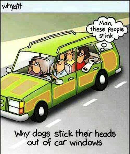 cartoons #hwg: