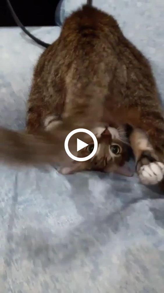 Quando seu gato quer ser um macaquinho