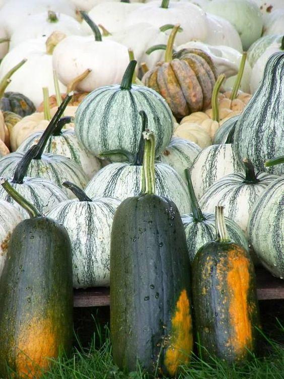 how to cook black futsu pumpkin