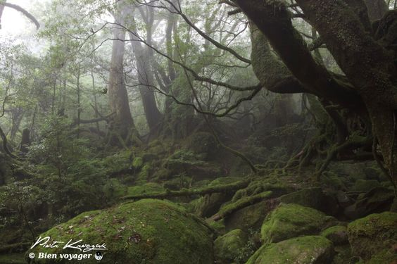 ville d'avray by jean-baptiste-camille corot | IMG 3221 585x388, yakushima vieille foret japon princesse monokoke ...