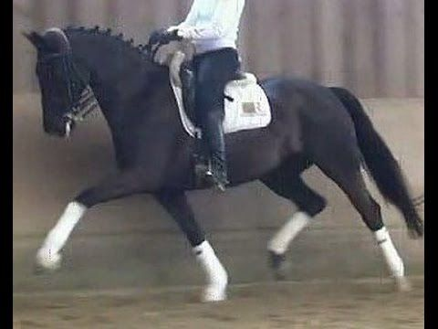 www.sporthorses-online.com 2006 Oldenburg mare Inter I priced to sell
