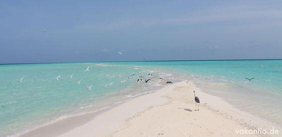 Malediven: Kuramathi Island Resort http://vakantio.de/sunreiser/malediven-kuramathi-island-resort-or-vakantio