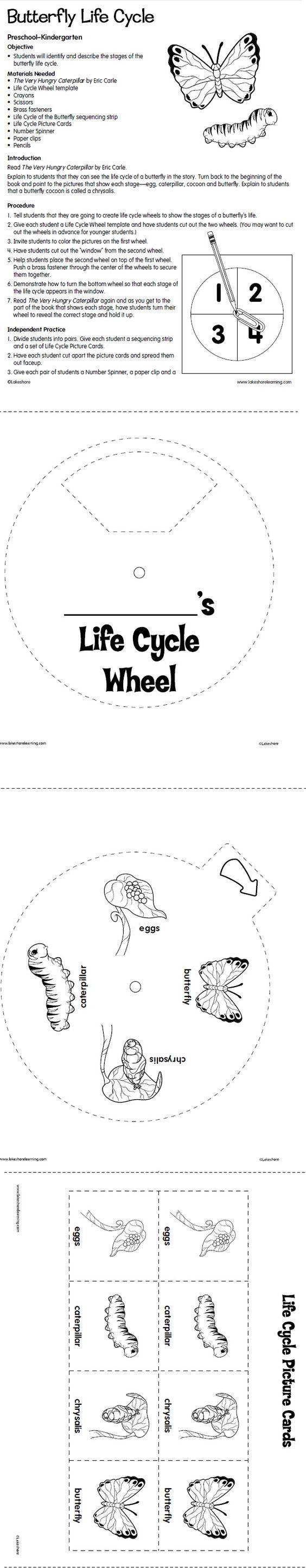 lesson plan life cycle of butterfly This butterfly life cycle lesson plan is suitable for kindergarten students describe and state the four stages of the life cycle of a butterfly for this life cycle lesson plan, students copy words and pictures from the life cycle and then identify each stage.