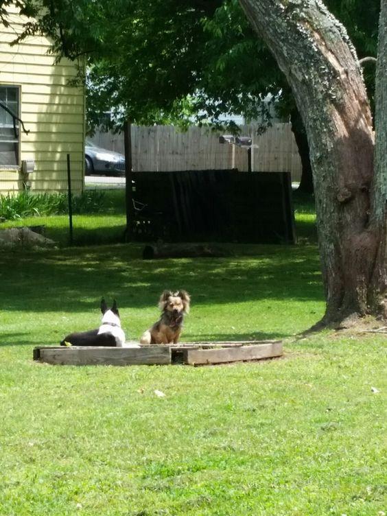 Sam and Bean....enjoying my freshly sown flowerbed