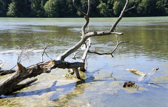Der gestaute Rhein bei Eglisau lockt zum Bade...