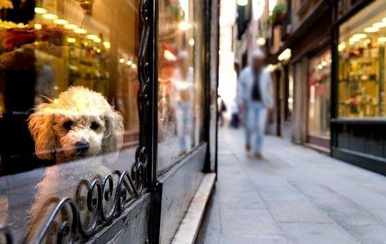 Cuidados com os animais no pet shop